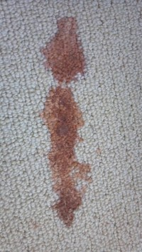 vomit on carpet  Floor Matttroy