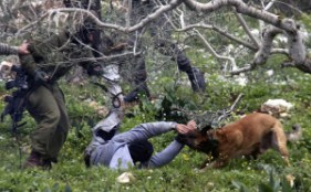 An Israeli army dog attacks a Palestinian protester during a demonstration against the expropriation of Palestinian land in the village of Kufr Qaddoum, near Nablus in the occupied West Bank, 16 March 2012. Wagdi Eshtayah APA images