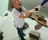 vasca-curatoriale-tartarughe-sequestrate-Acquario-di-Genova