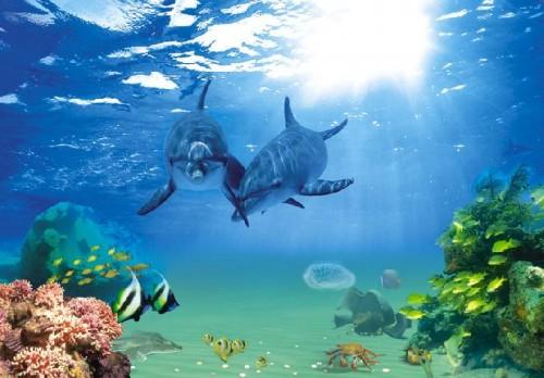 Delfini 1  Latina