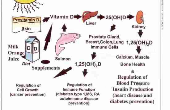 VitaminaDsimetabolismul