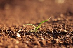 startup extra-agricole