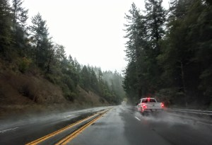 Redwood forest storms