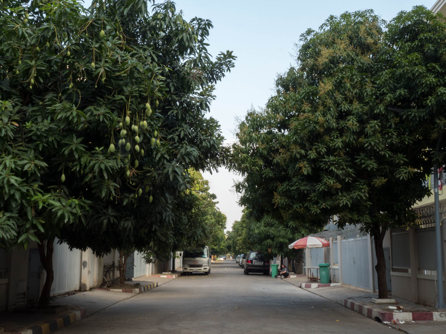 street with trees Koh Pich