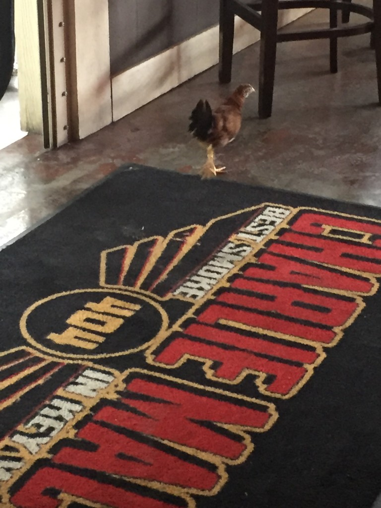 A friendly Key West chicken comes to visit us at Charlie Macs!