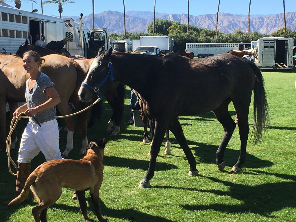 Horses... dogs...what more can you want?