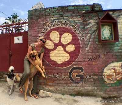 street dog care nepal kathmandu boudha