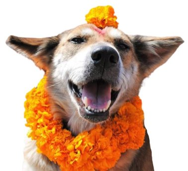 Kukur Tihar happy dog with a flower on her head