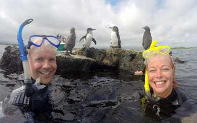 This is also your time to get up close and personal with the darling Galapagos penguin. We hear they enjoy selfies.