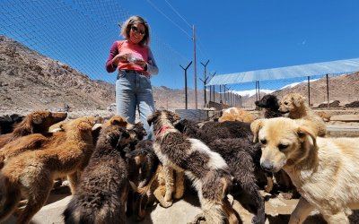 Treat, Spay, Love: Volunteering with Street Dogs in Ladakh, India