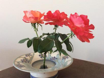 siri amrita rose