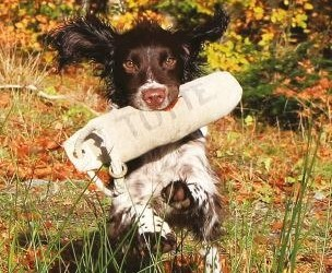 Field Trials for Spaniels