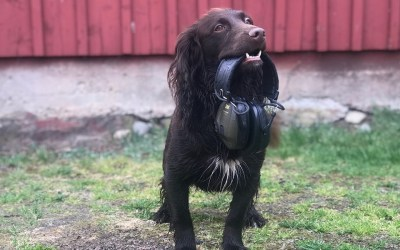 Training a Gun-shy Dog – Part 4