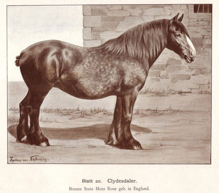 clydesdale horse drawing