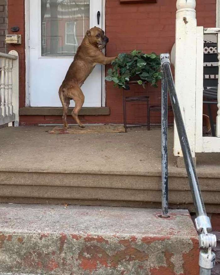 dog waits on front porch for family that moved away