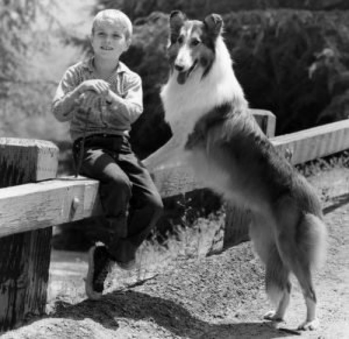 Jon Provost as Timmy Martin and Lassie became an iconic duo