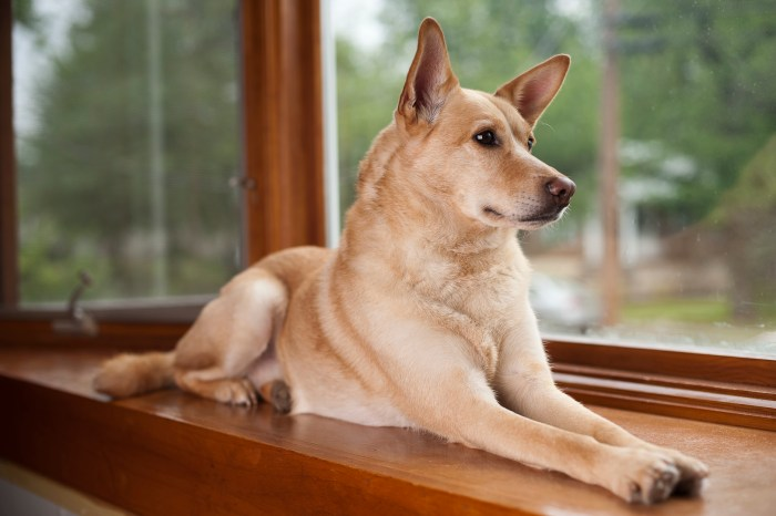 dog laying by a window