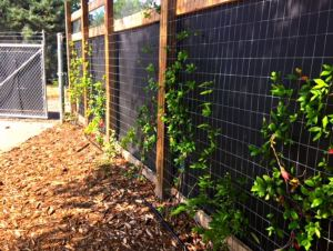 Noise reducing barrier restores tranquility to botanic - Georgia southern botanical gardens ...