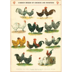 Decorative Kitchen Canisters Sets Counter Lamps Chicken Rooster Breeds Chart Vintage Style Poster At Retro ...