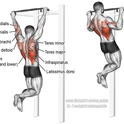 Pull Up Muscles Worked Diagram Solar Panels Wiring Installation 9 Methods To Heal A Damaged Back And Keep It Strong
