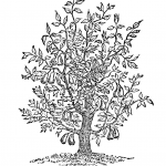 Tree Drawings & Illustrations