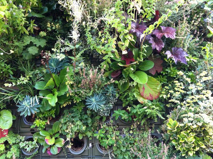 mur vegetal  interieur exterieur  prix mur vegetal  mur
