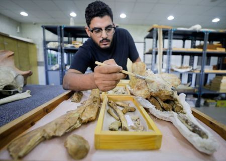Scientists Discover Fossil of Previously Unknown Four-legged Whale in Egypt