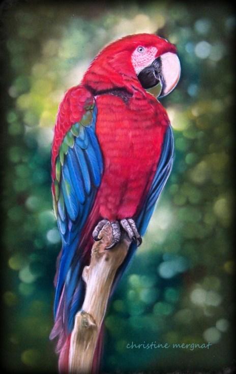 """Perroquet rouge, d'après une photo de """"Pat & Jos"""" DISPO"""
