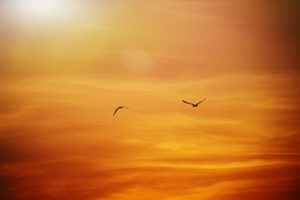 Birds flying into orange clouds