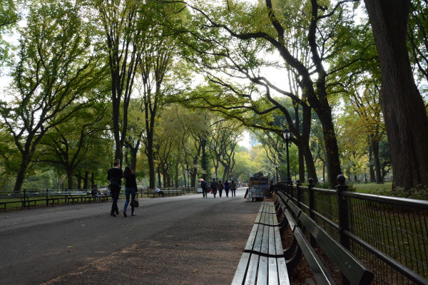 path-in-central-park