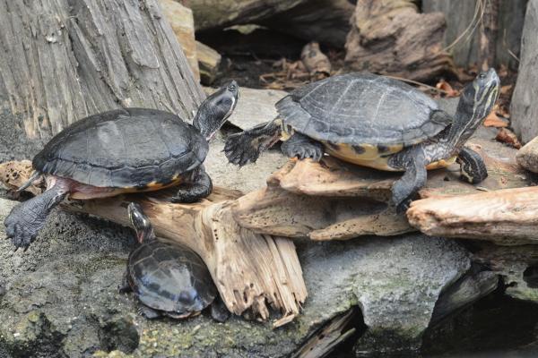 Turtles at the aquarium