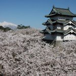 My Must See List: Cherry Blossom Festival