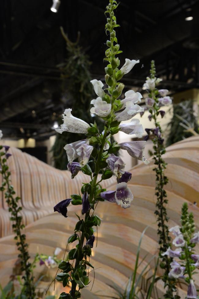 flowers at the philadelphia flower show