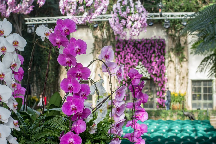 Cascading orchid display at Longwood Gardens' Orchid Extravaganza in Kennett Square, Pennsylvania.