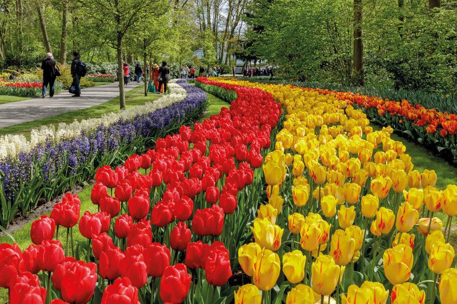 keukenhof garden tulip park