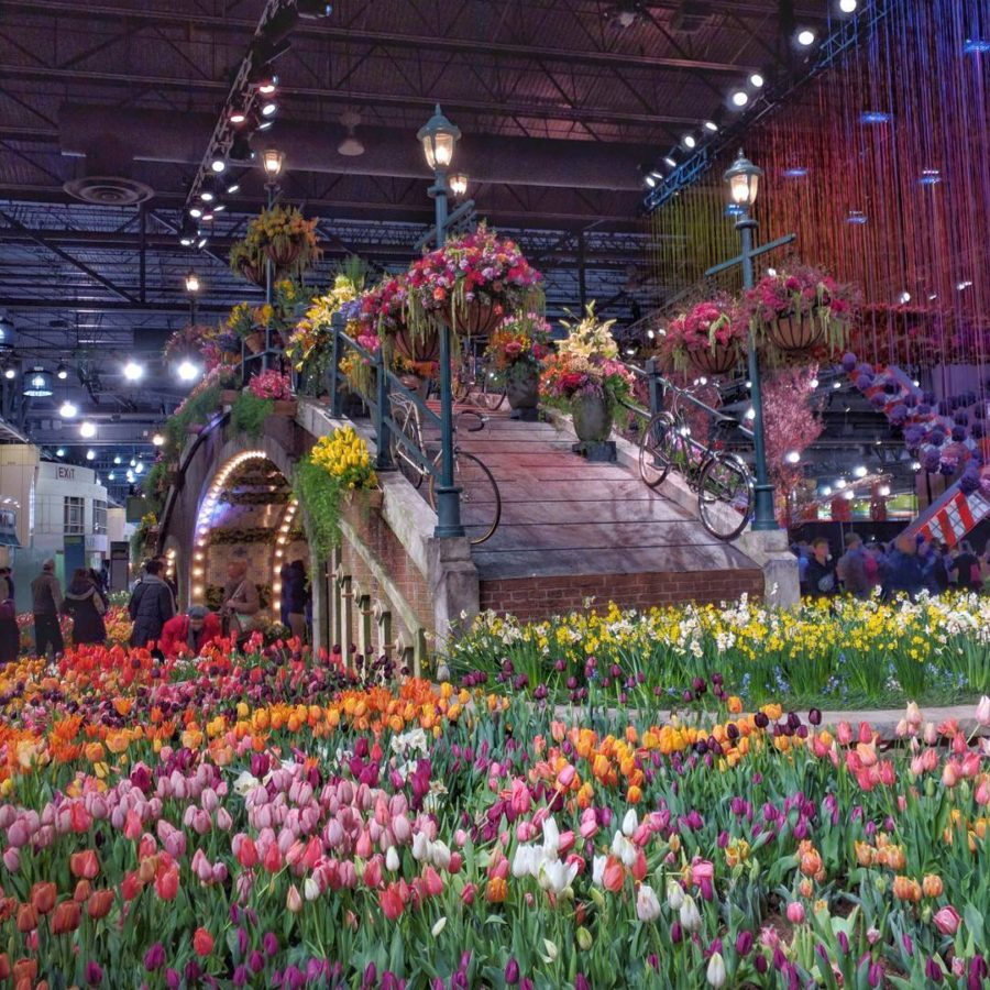 philadelphia flower show 2017 holland flowering the world