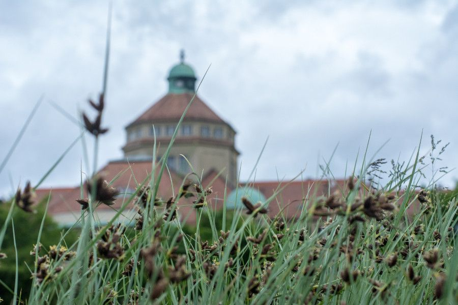 The Munich Botanical Garden seen through the grass in Germany.