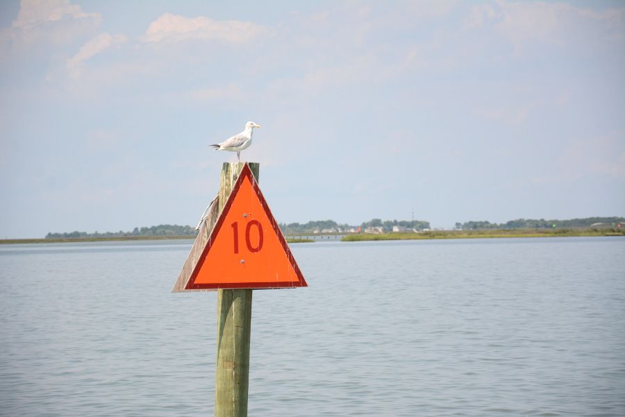 Seagull on a pylon in the Chesapeake Bay.