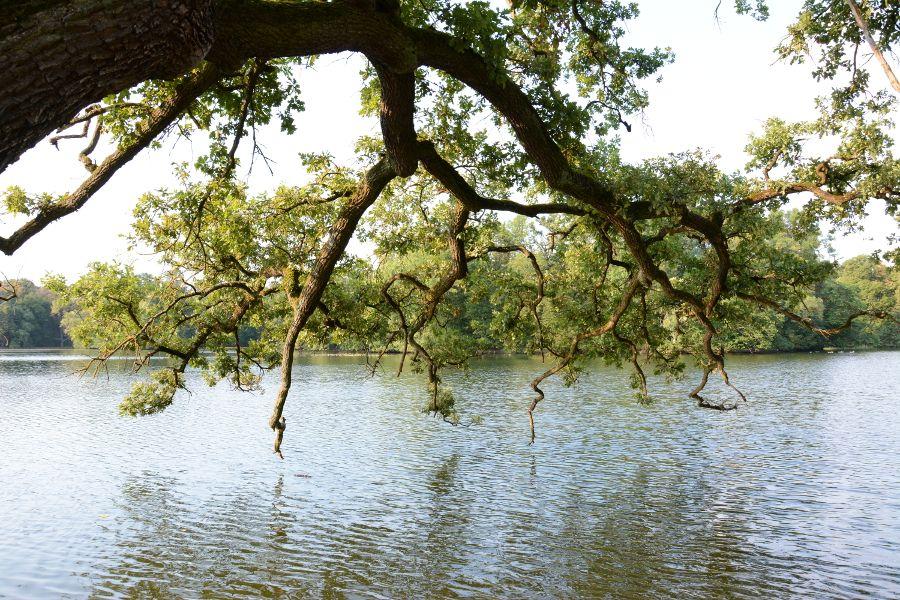 Tree hanging over Badenburg Lake at Nymphenburg Park in Munich, Germany.