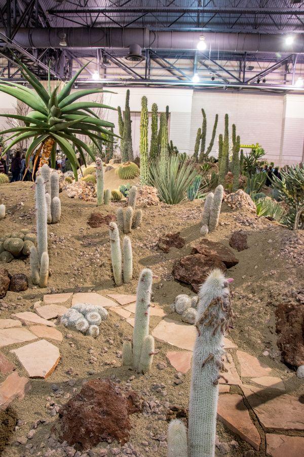 Desert exhibit at the Philadelphia Flower Show 2018.