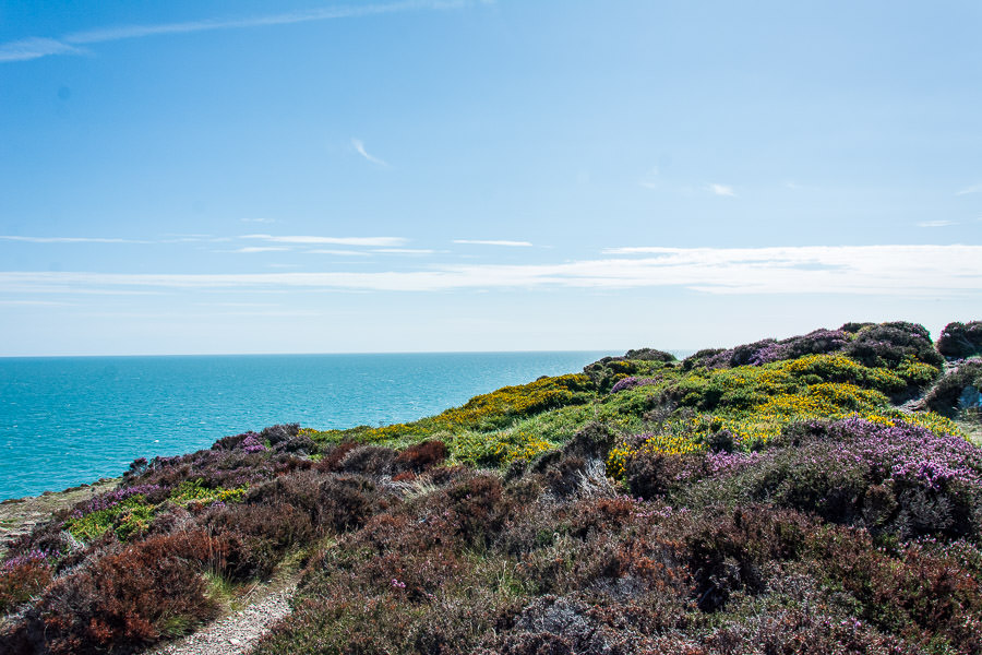 Flowers and shrubs cover the landscape along the Howth cliff walk.