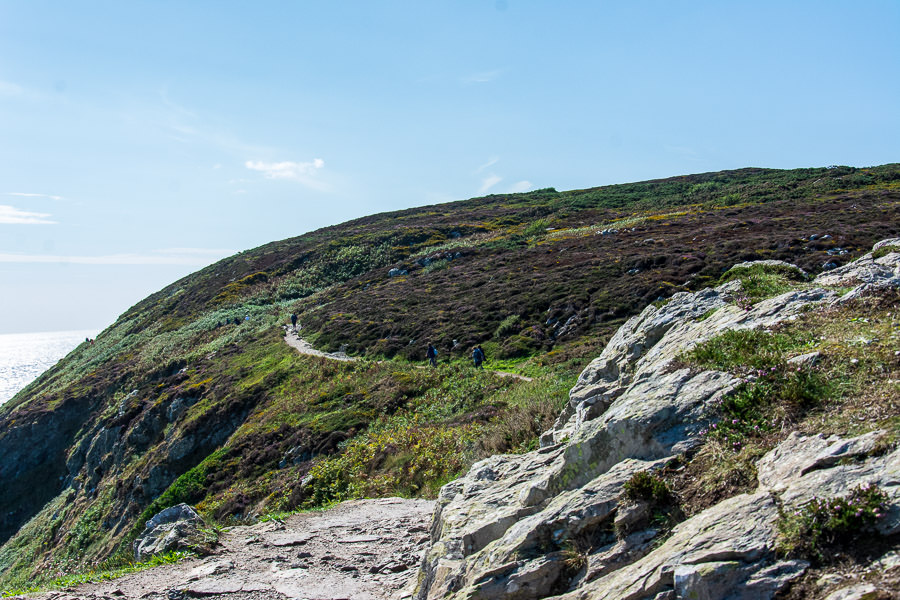 The Howth Cliff Walk cuts a winding path at times.