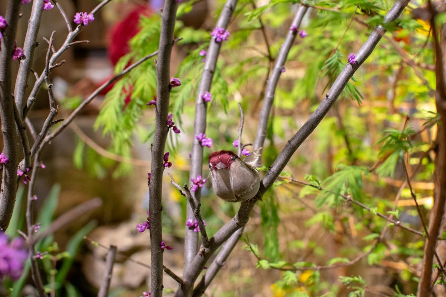 An ornamental bird sits on a tree about to bloom.