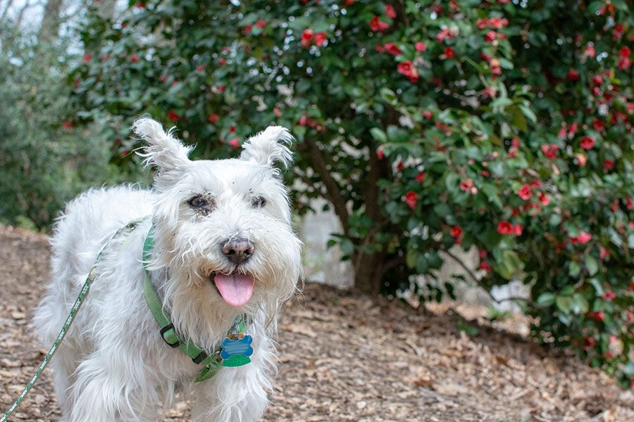 The National Arboretum is another dog-friendly spot in Washington, DC and a great spot to find spring blossoms!