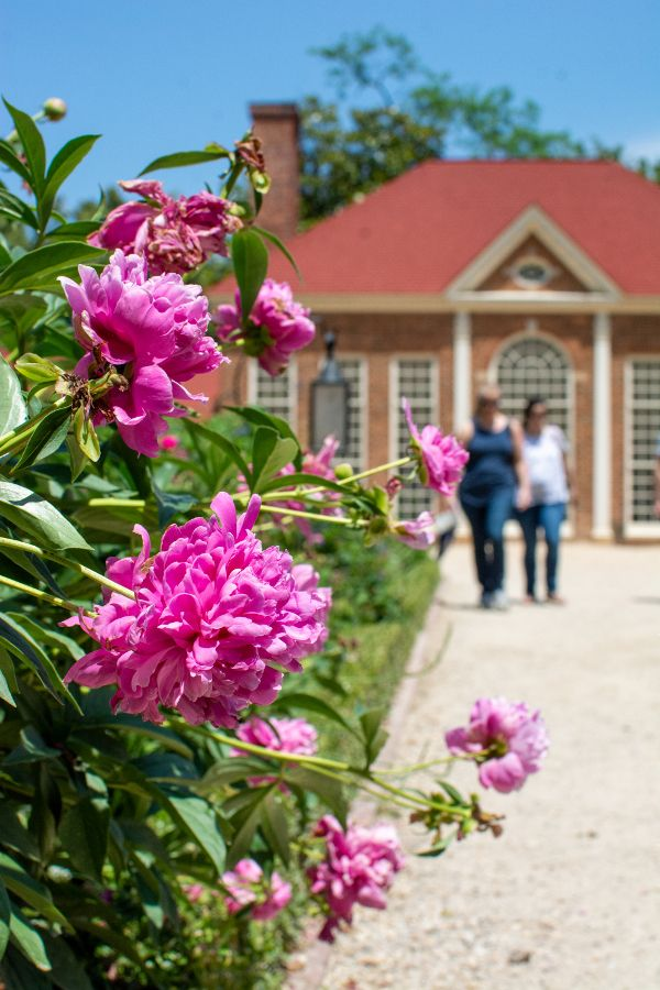 Flowers in the Upper Garden at Mount Vernon.