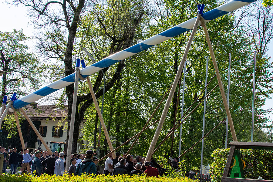 Aying's Burschenverein celebrate May Day by lifting a Maypole into position in this longstanding German tradition.