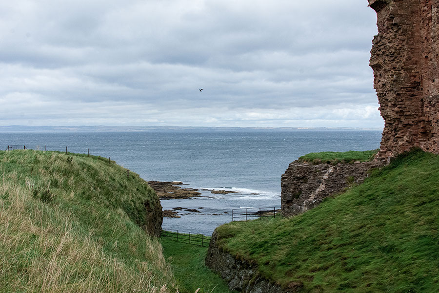 A bird soars over cliffs at Oxroad Bay.
