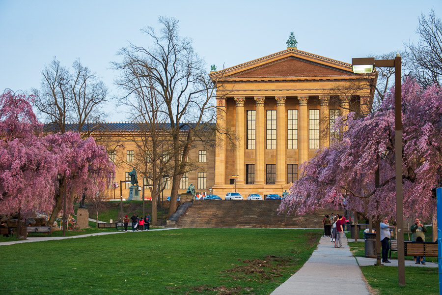 The western side of the Philadelphia Museum of Art is framed in Philadelphia cherry blossoms.
