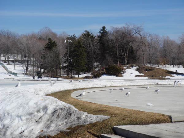 Parc de Montréal avec mouettes