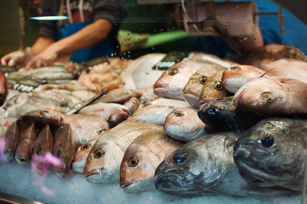 poisson d'australie